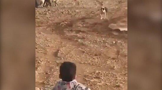 Köpeğe dayılanan ufaklığın trajik sonu
