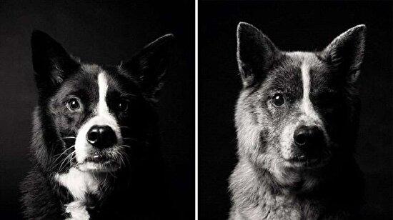 Köpekler nasıl yaşlanıyor