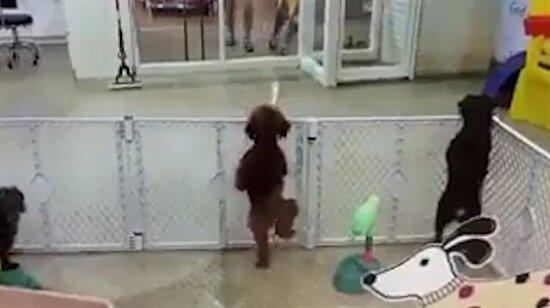 Sahibini gören köpek öyle sevindi ki