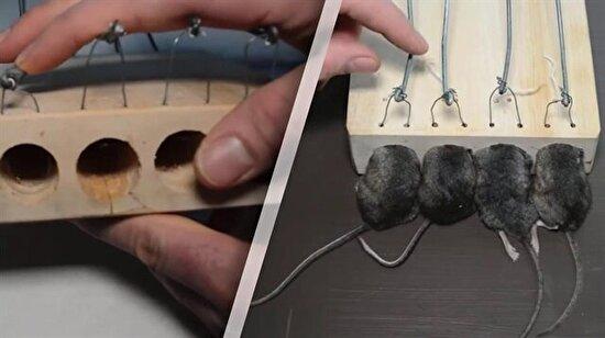 100 sene önce kullanılan 'fare kapanı' hâlâ çalışıyor!