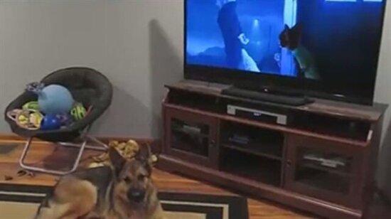 İzlediği filmden etkilenen köpek
