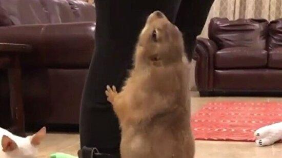 O havucu hemen bana ver!