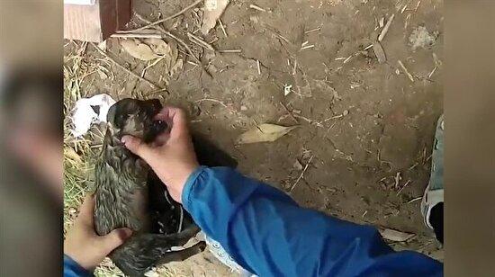 Suda boğulan yavru köpeğin zorlu kurtarılışı