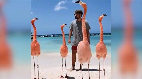 Flamingolarla burun buruna dans eden adam