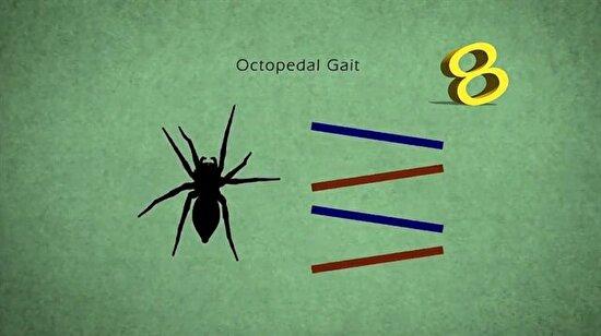 Böceklerin yürüyüş prensipleri böyle saptandı