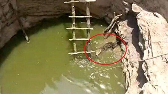 Kuyuya düşen leoparı merdivenle kurtaran köylüler