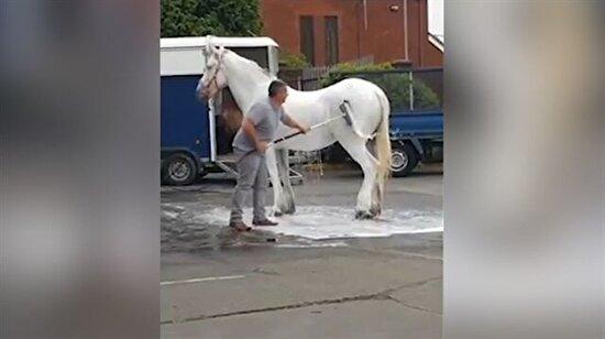 Benzin istasyonunda fırçayla at yıkayan adam