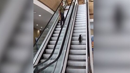 Yürüyen merdivene 'ters' binen kedi!