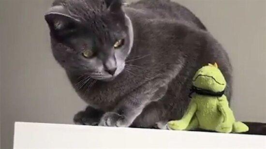 Oyuncağından sıkılan atarlı kedi