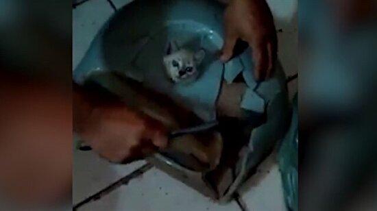 Lavaboya sıkışan yavru kedinin zorlu kurtarılışı