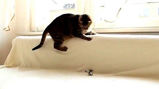 8 Ağustos Dünya Kediler Günü anısına...