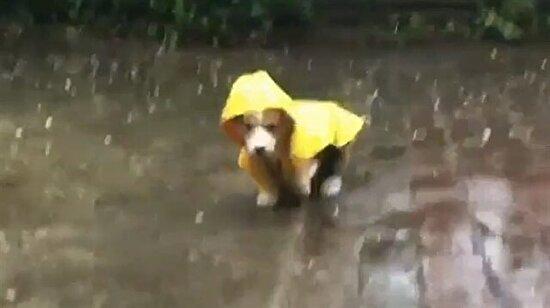 Sarı yağmurluk en çok sana yakışmış