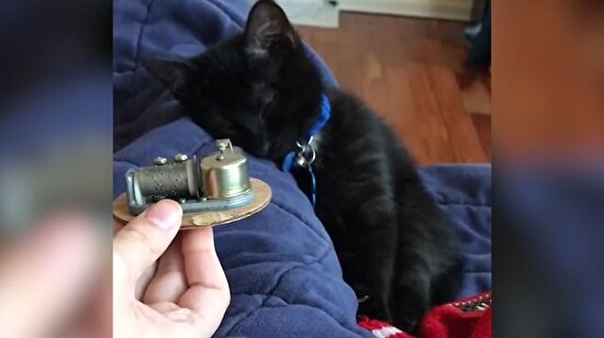 Müzik kutusuyla uyuyan sevimli siyah kedi