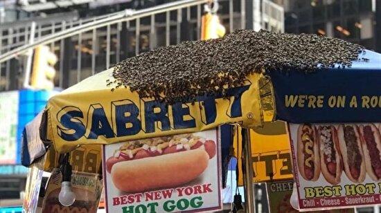 Times Meydanı'nda sosisli sandviç standını arılar istila etti