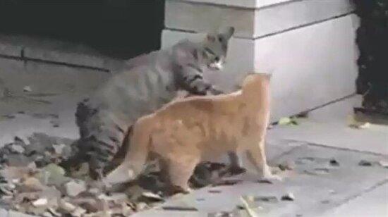 Şu hayvanlara Smackdown izletmeyin