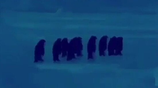 Bir penguen düşünce diğerlerinin söylenmeye başlaması