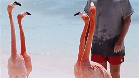 Telaşlı flamingolar
