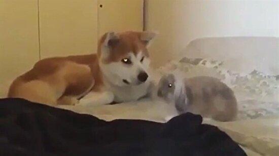Hadi kalk benimle oyna!