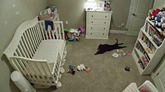 Gizlice bebek odasına sızıp sevinç gösterisi yapan köpek