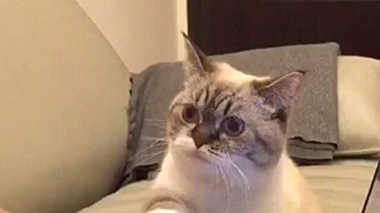 Eğer bir kediniz varsa işinizi ertelemek zorunda kalabilirsiniz