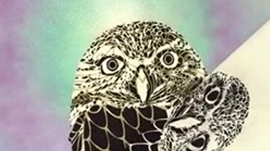 Baskılı baykuş portresi