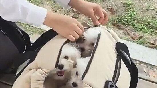 Çantada mutluluk