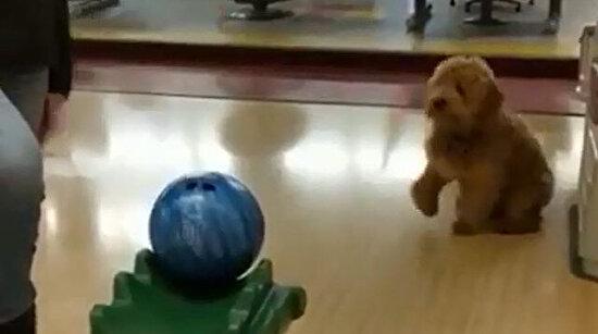 Kim bu bowling ustası?