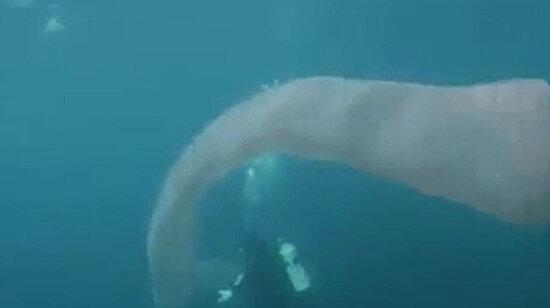 Binlerce organizmadan oluşan 8 metre uzunluğunda bir deniz solucanı