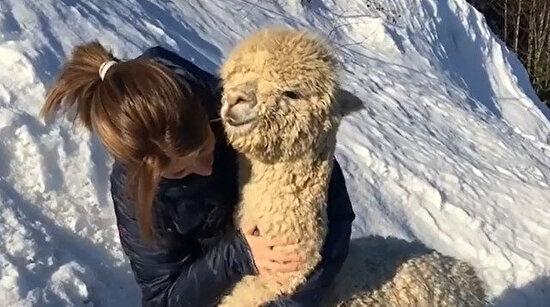 Hepimizin bir alpakaya ihtiyacı var