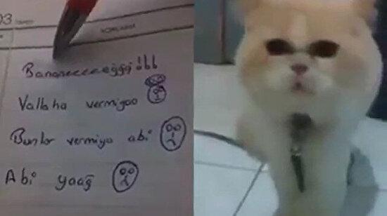 Kediler bizim dili de çözdü artık dünyayı ele geçirmeleri yakındır