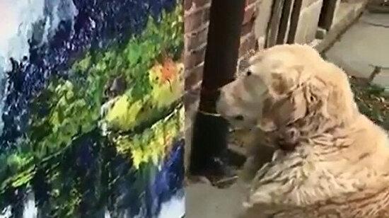 Sanatın derinliklerinde kendini kaybeden köpek