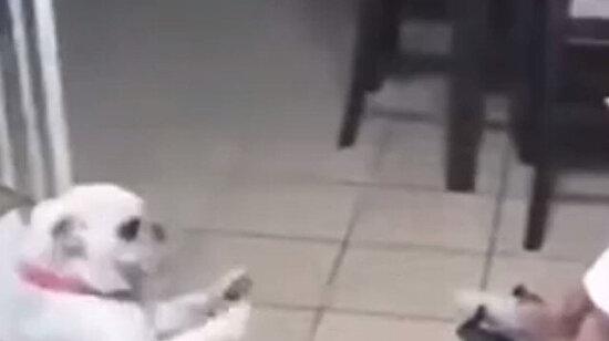 Uyanamadım herhalde yoksa köpek nasıl göbek atabilir ki