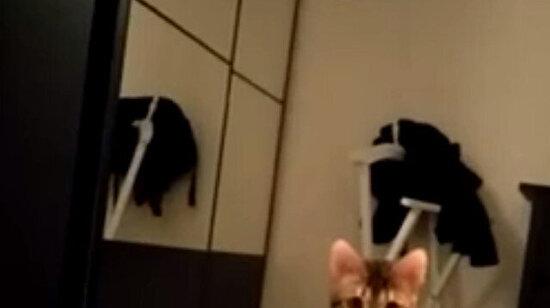 Aslan saldırısı kameralara böyle yansıdı
