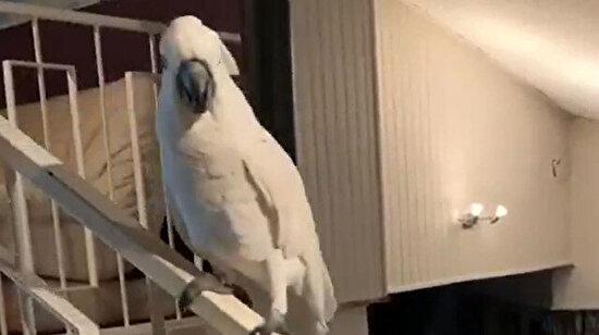 Gördüğüm en cool hareket