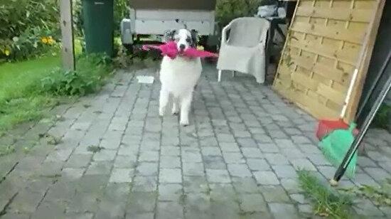 Etrafına mutluluk saçan köpek
