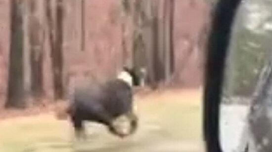 Usain Dog