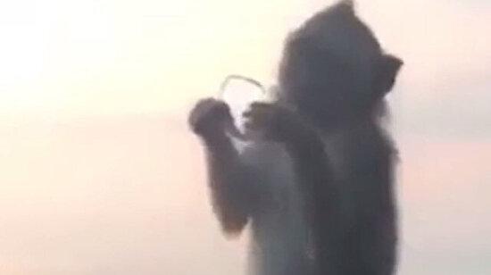 Büyüteç kullanan maymun