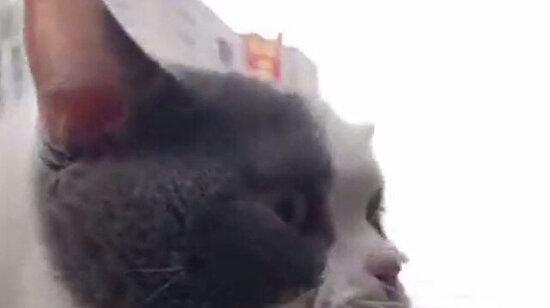 Kediler bize hakaret ediyor olabilir mi?
