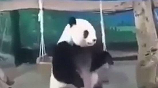 Sakarlık konusunda panda gibiyim
