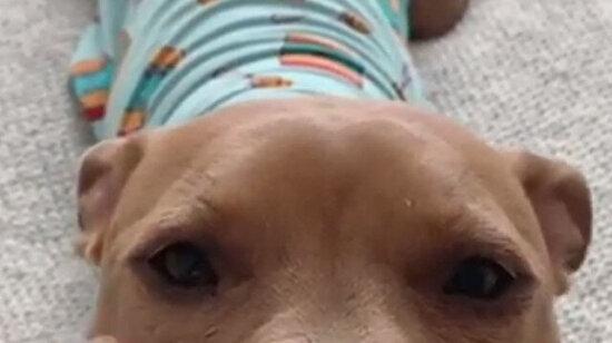 İlginin köpeğiyiz