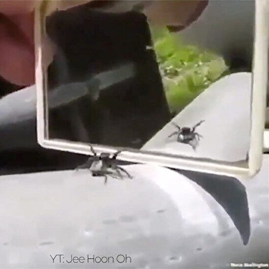 Böcek bile bizden mutlu