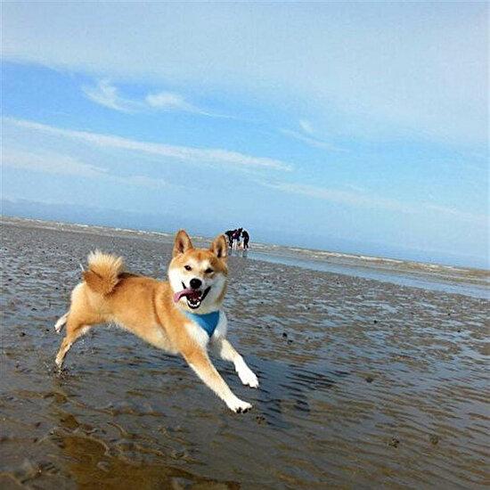 Sahilin keyfini köpekler çıkardı
