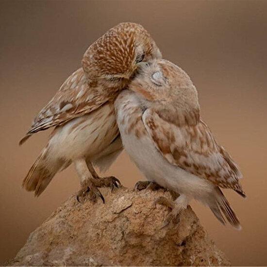 Doğada sevgi
