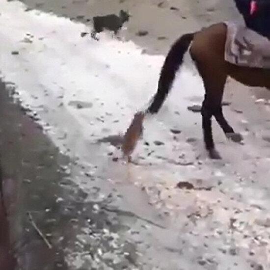 Bir tane bile normal kedi yok bir tane bile