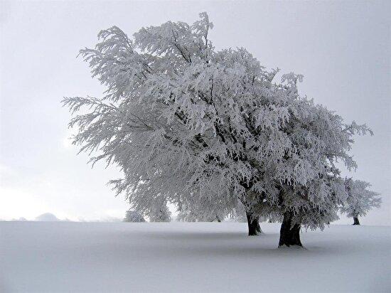 Karla kaplı bir ağaç
