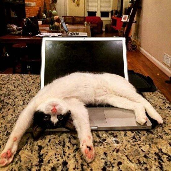 Bilgisayarı kapat benimle ilgilen..
