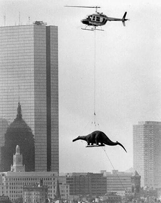 Helikopter ile Boston Bilim Müzesi'ne taşınan dinozor. Amerika, 1984