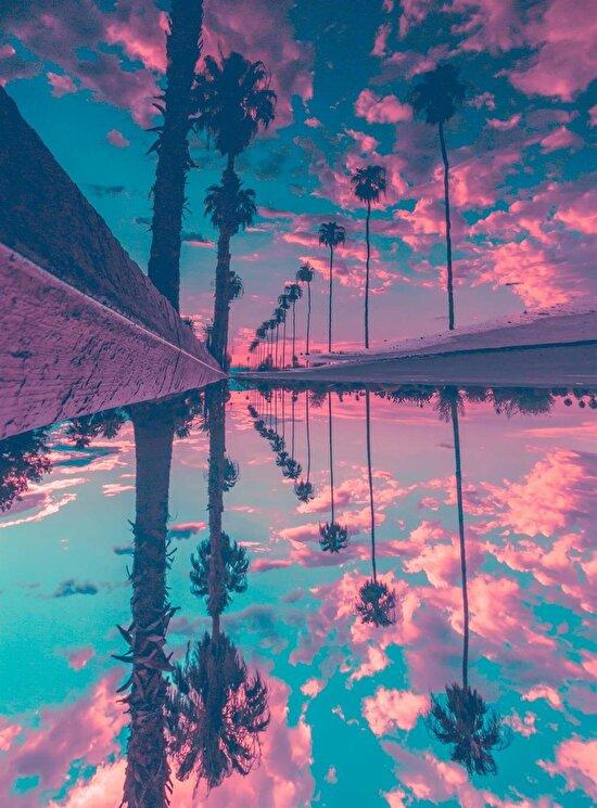 Palmiyelerin sokağa yansımasından oluşan eşsiz görüntü
