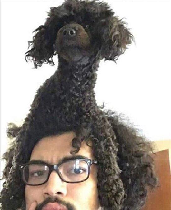 Saçın köpeği var