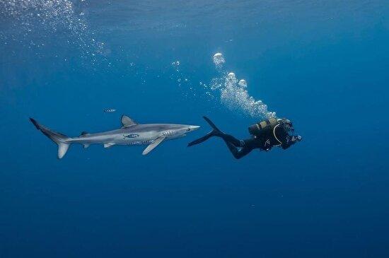 Mavi köpek balığı Portekiz sularında bir dalgıcı takip ediyor